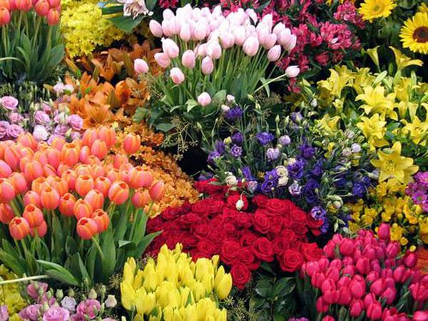 1.Cắm hoa ngày Tết giữ sao cho tươi lâu