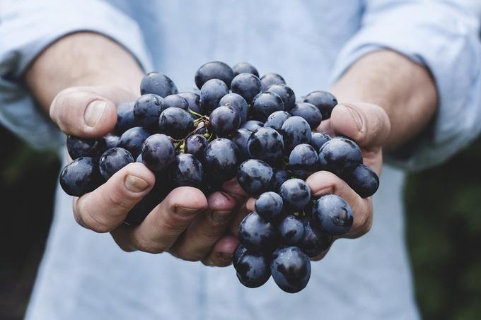 Nho có hàm lượng đường rất cao vì vậy bạn cũng nên cân nhắc khi tiêu thụ loại quả này. Các chuyên gia dinh dưỡng đưa ra khuyến cáo không nên ăn nho cùng các loại thực phẩm nhiều dầu mỡ, bơ sữa…