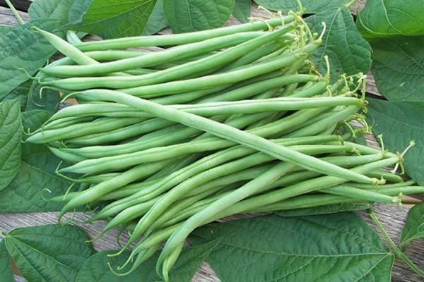 25. 5 loại rau củ nếu nấu không kỹ sẽ chứa độc tính hơn cả thạch tín1