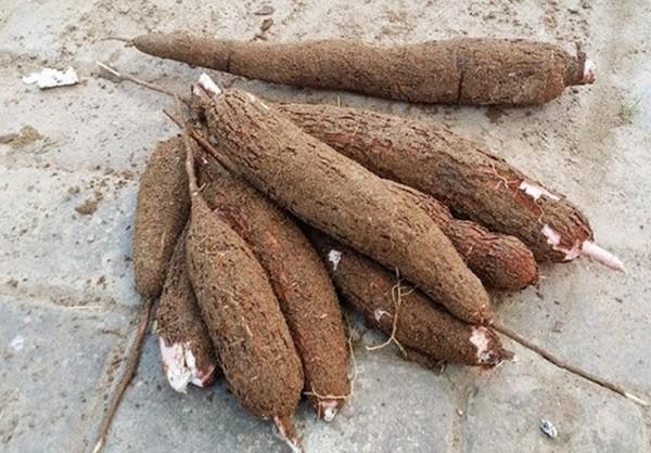 25. 5 loại rau củ nếu nấu không kỹ sẽ chứa độc tính hơn cả thạch tín4