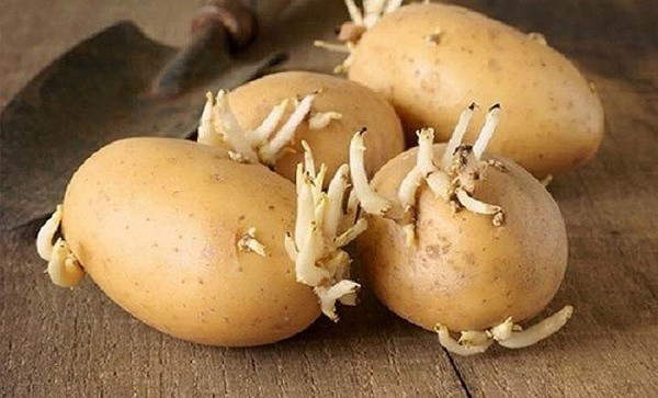 25. 5 loại rau củ nếu nấu không kỹ sẽ chứa độc tính hơn cả thạch tín6