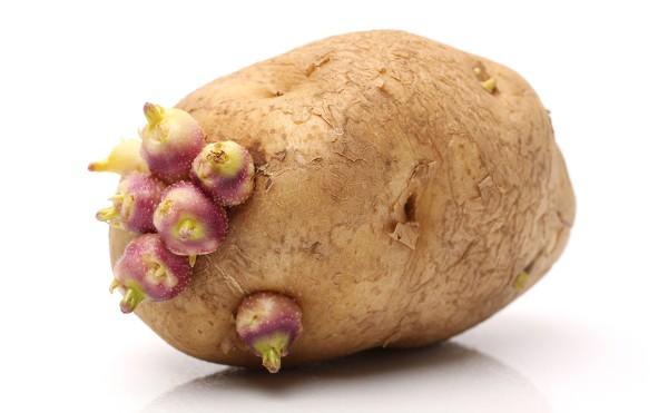 25. 5 loại rau củ nếu nấu không kỹ sẽ chứa độc tính hơn cả thạch tín7