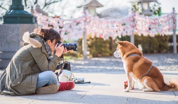 Hachi là chó cưng của nhiếp ảnh gia Masayo Ishizuki, thuộc giống shiba - loại chó nhỏ nhất trong sáu giống chó Nhật Bản nguyên thủy. Cả hai chung sở thích du lịch, Hachi còn có khả năng làm dáng điệu nghệ trước ống kính của chủ trong các chuyến đi.