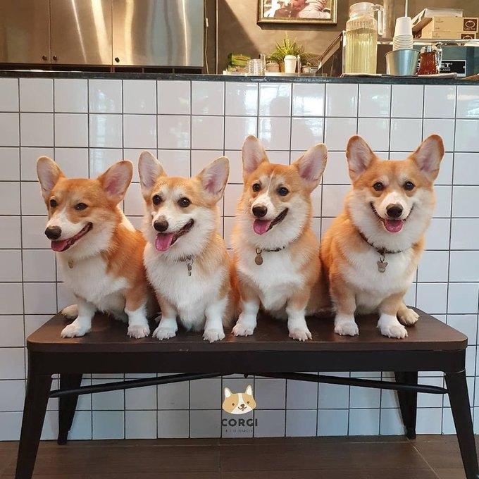 """Quán có 12 """"nhân viên"""" bốn chân rất nhiệt tình với tên gọi lần lượt là Dean, Quinn, Porkchop, Pumpkin, Salmon, Bean, Bone, Babycorn, Blossom, Bluebell, Barley và Buttercup. Đây đều là những cái tên dựa trên các loại đồ ăn mà mỗi chú thích ăn."""