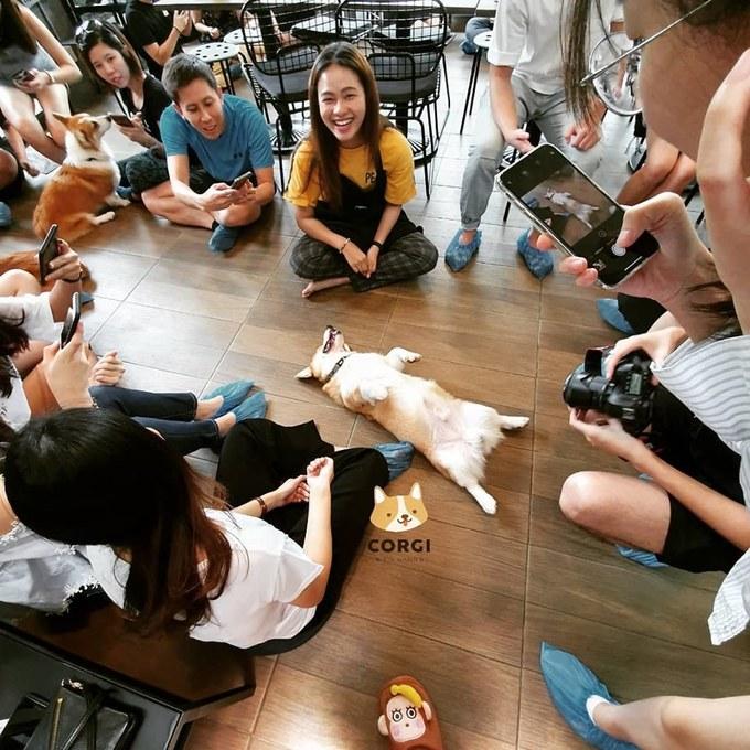 Khách vào quán sẽ mua vé với 2 mức là 250 Baht (183.000 đồng) bao gồm một đồ uống và một giờ chơi với chó. Mức giá 350 Baht (257.000 đồng) gồm một đồ uống và một bánh kèm một giờ chơi với chó.