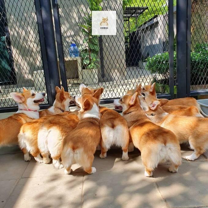 """Việc mở cửa xen kẽ thời gian trống ở giữa giúp những chú chó có thời gian nghỉ ngơi, tránh việc """"phục vụ"""" quá tải. Trong thời gian một giờ, bạn có thể chụp ảnh, chơi đùa nhẹ nhàng hay chạy bộ cùng chúng. Tuy nhiên khách được khuyến cáo không nên cho ăn bởi chúng có chế độ ăn riêng."""