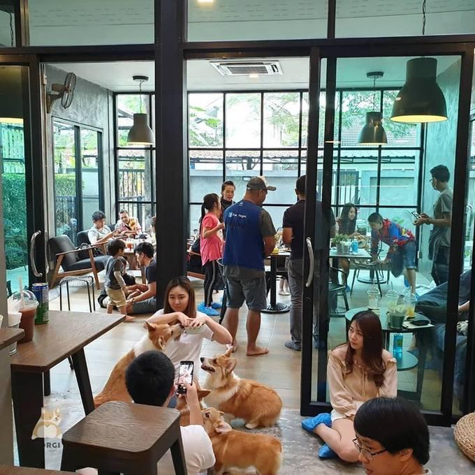 Corgi in the garden nhanh chóng trở thành một điểm check in hot trên Instagram, khiến thực khách muốn tới đây phải xếp hàng hoặc đặt chỗ trước để tránh phải chờ đợi.