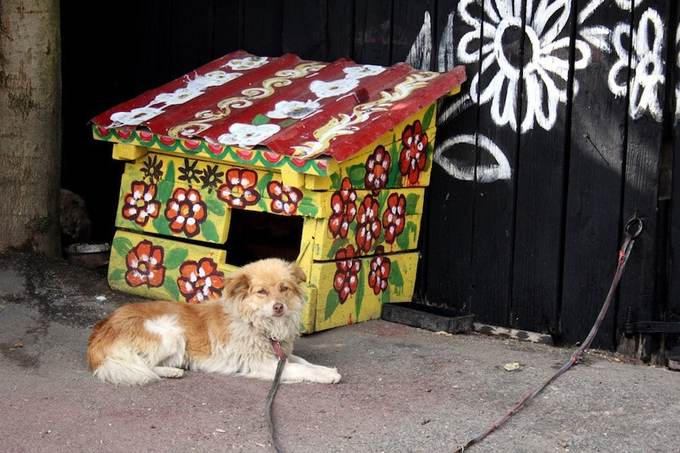 Không chỉ nhà ở mà nhà của cún, hàng rào, giếng nước, bất cứ chỗ nào có tường đều được trang trí họa tiết hoa lá xinh xắn.