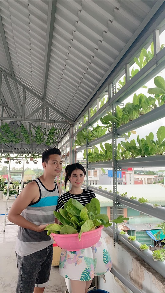 Vợ chồng Kha Ly - Thanh Duy thu hoạch rau trong vườn nhà.