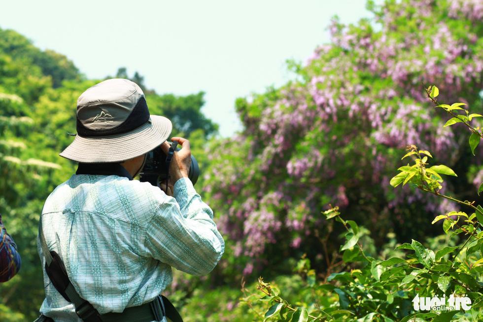 Nhiếp ảnh gia săn ảnh hoa thàn mát trước khi hết mùa - Ảnh: TẤN LỰC