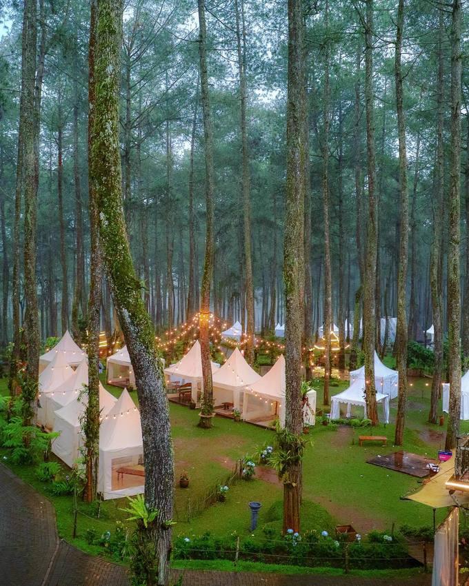 12.Vườn lan đẹp như cổ tích ở Indonesia4