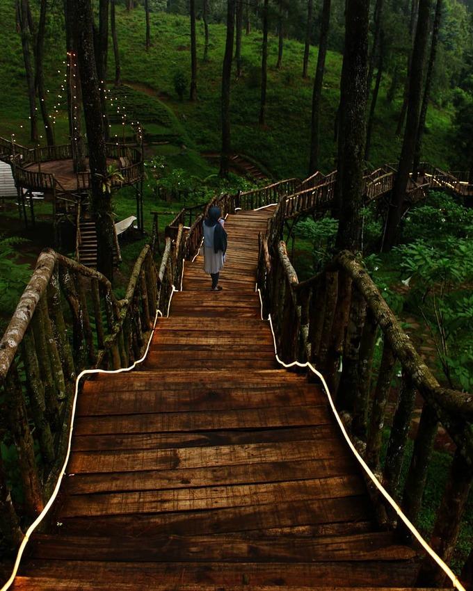 12.Vườn lan đẹp như cổ tích ở Indonesia5