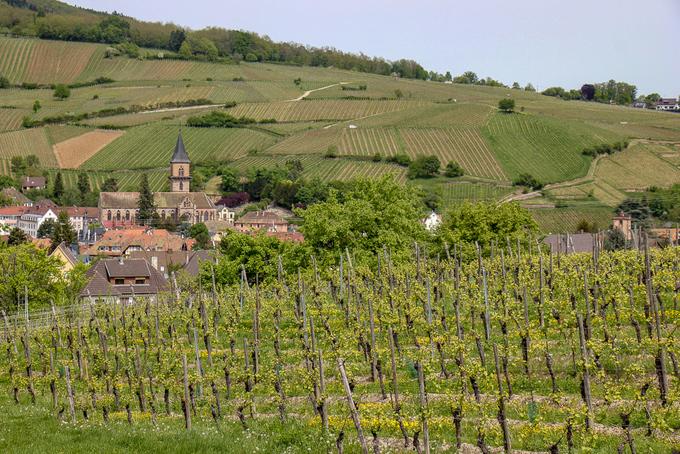 Ngoài ra, đến Colmar, bạn không nên bỏ lỡ cơ hội thưởng thức rượu vang gia truyền. Bạn có thể thuê xe đạp dạo quanh con đường rượu vang - La Route des Vins - băng qua những ngọn đồi trồng nho trải dài. Mỗi vườn nho thường có hầm rượu mở cửa đón du khách hay nhà hàng cho khách thưởng thức món Pháp chính gốc.