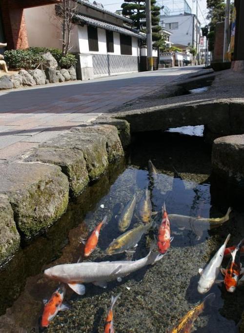 25.Thị trấn sạch tới mức có 1.000 chú cá bơi dưới cống ở Nhật