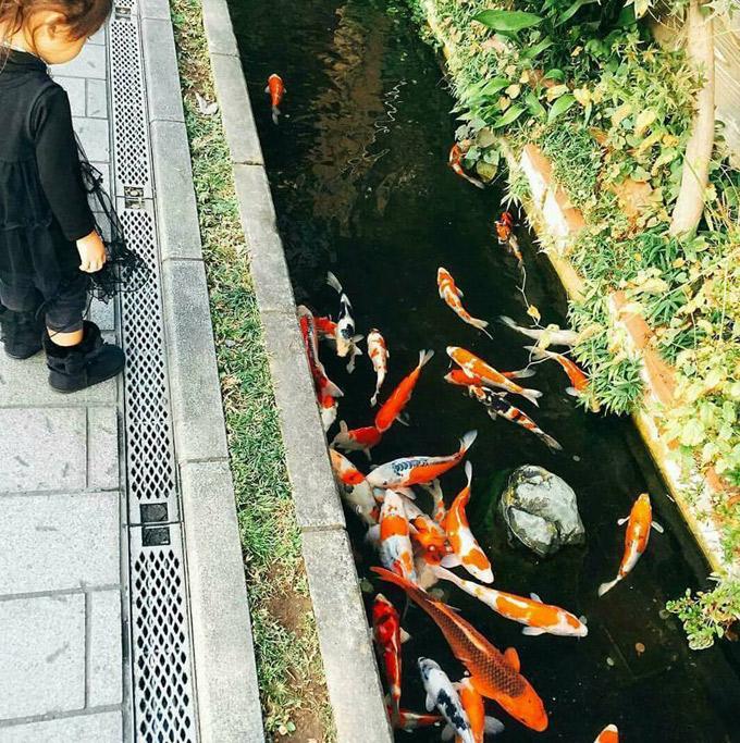 25.Thị trấn sạch tới mức có 1.000 chú cá bơi dưới cống ở Nhật1