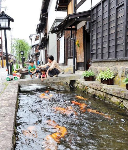 25.Thị trấn sạch tới mức có 1.000 chú cá bơi dưới cống ở Nhật2