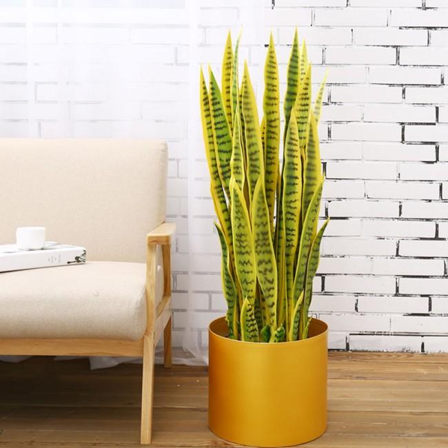 4. 5 loại cây thanh lọc không khí1