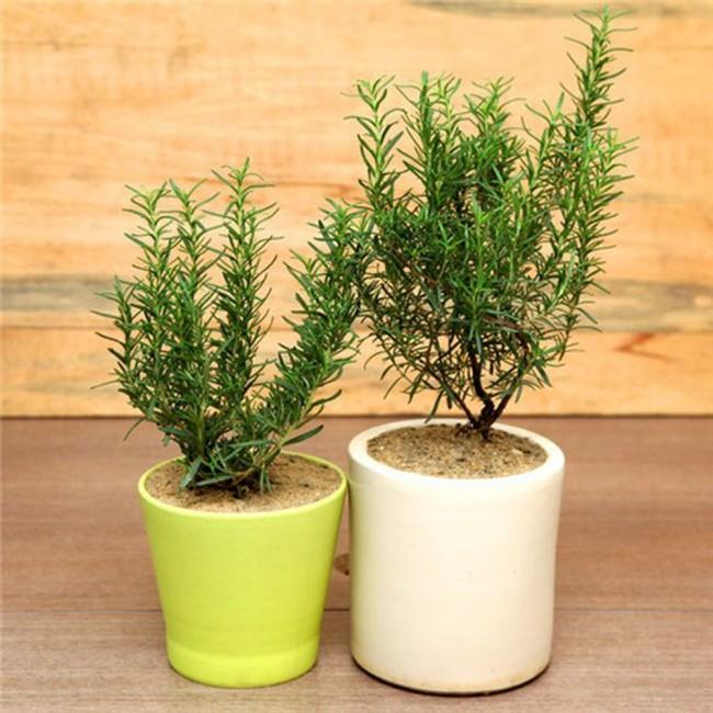 4. 5 loại cây thanh lọc không khí3