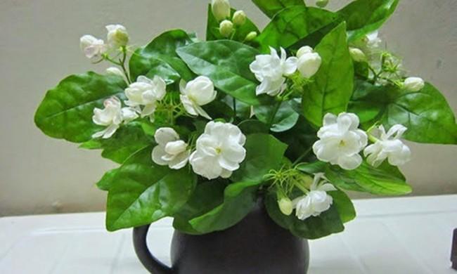 4. 5 loại cây thanh lọc không khí4
