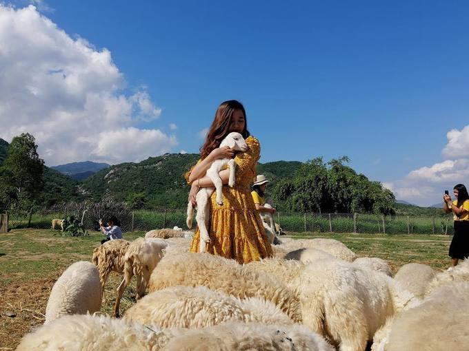 6.Đồng cừu như trời Tây thu nhỏ ở Khánh Hòa1