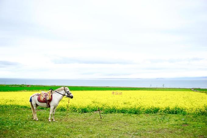 1.Xứ 'hoa vàng cỏ xanh' đẹp như tranh vẽ ở Trung Quốc7