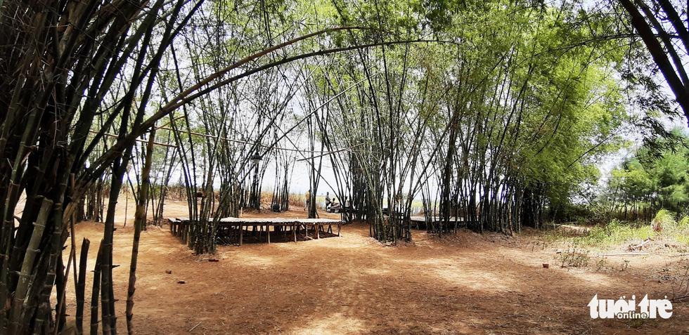 Tre đan chằn chịt tạo bóng mát bên bờ sông Thu Bồn ở một khu nghỉ dưỡng tại Triêm Tây - Ảnh: LÊ TRUNG