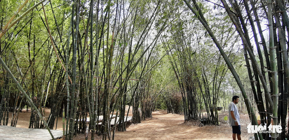 Tre uốn cong đan thành nhiều lối đi - Ảnh: LÊ TRUNG