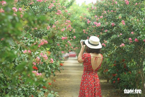 Con đường hoa tường vi đẹp mộng mơ như đưa du khách lạc vào xứ sở diệu kỳ - Ảnh: NGUYỄN HIỀN