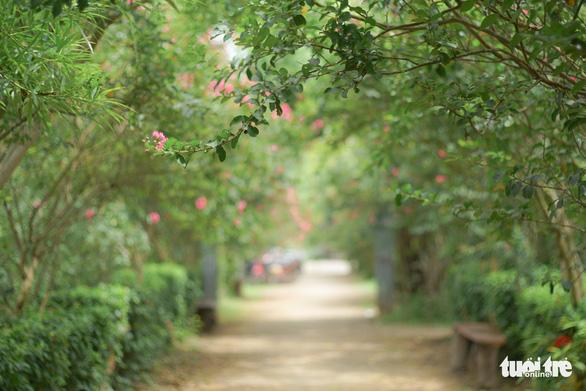 Con đường hoa tường vi sâu hút tầm mắt, bình yên khác hẳn với những xô bồ, vội vã trong thành phố - Ảnh: NGUYỄN HIỀN