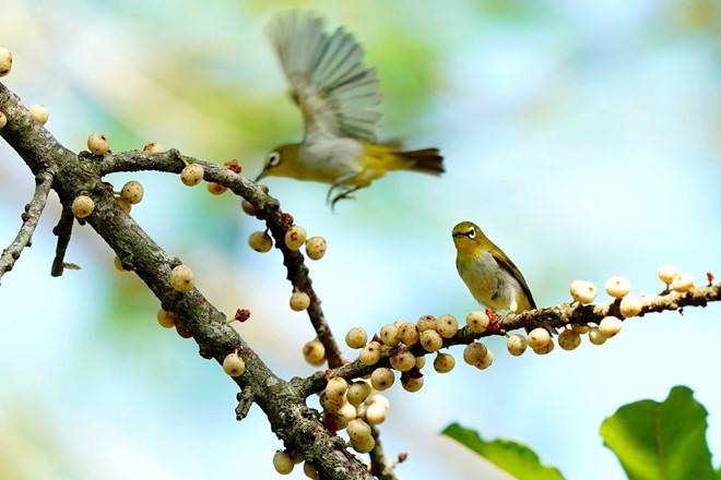 Buổi sáng, có thể đạp xe ở khu Vàm Sát và ngắm những đàn chim đi kiếm ăn_ ẢNH: ĐỘC LẬP