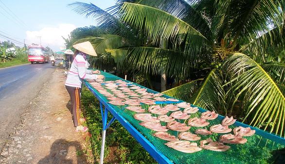 Cá lóc nuôi làm khô thường là con lớn