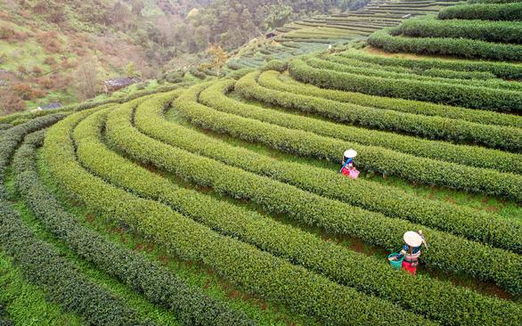 Sắc xanh của thành phố Chiang Mai, Thái Lan - Ảnh: Travel and Leisure