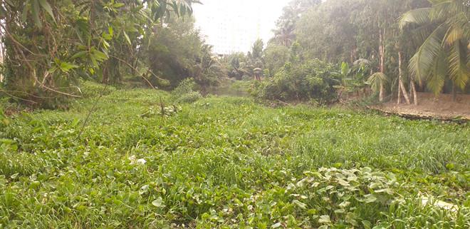 Rạch Đỉa dài khoảng 500 m, tiếp giáp giữa 2 phường Tam Bình và Hiệp Bình Phước, Q.Thủ Đức, TP.HCM bị bỏ hoang nhiều năm