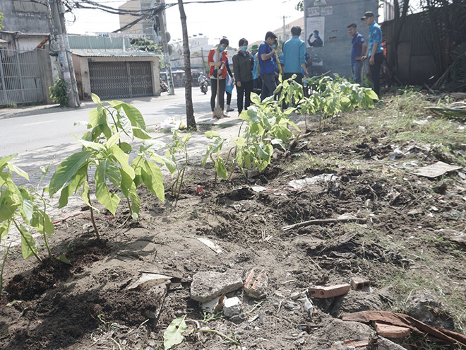 Bãi rác đã được thanh niên tình nguyện dọn sạch để trồng hoa kiểng