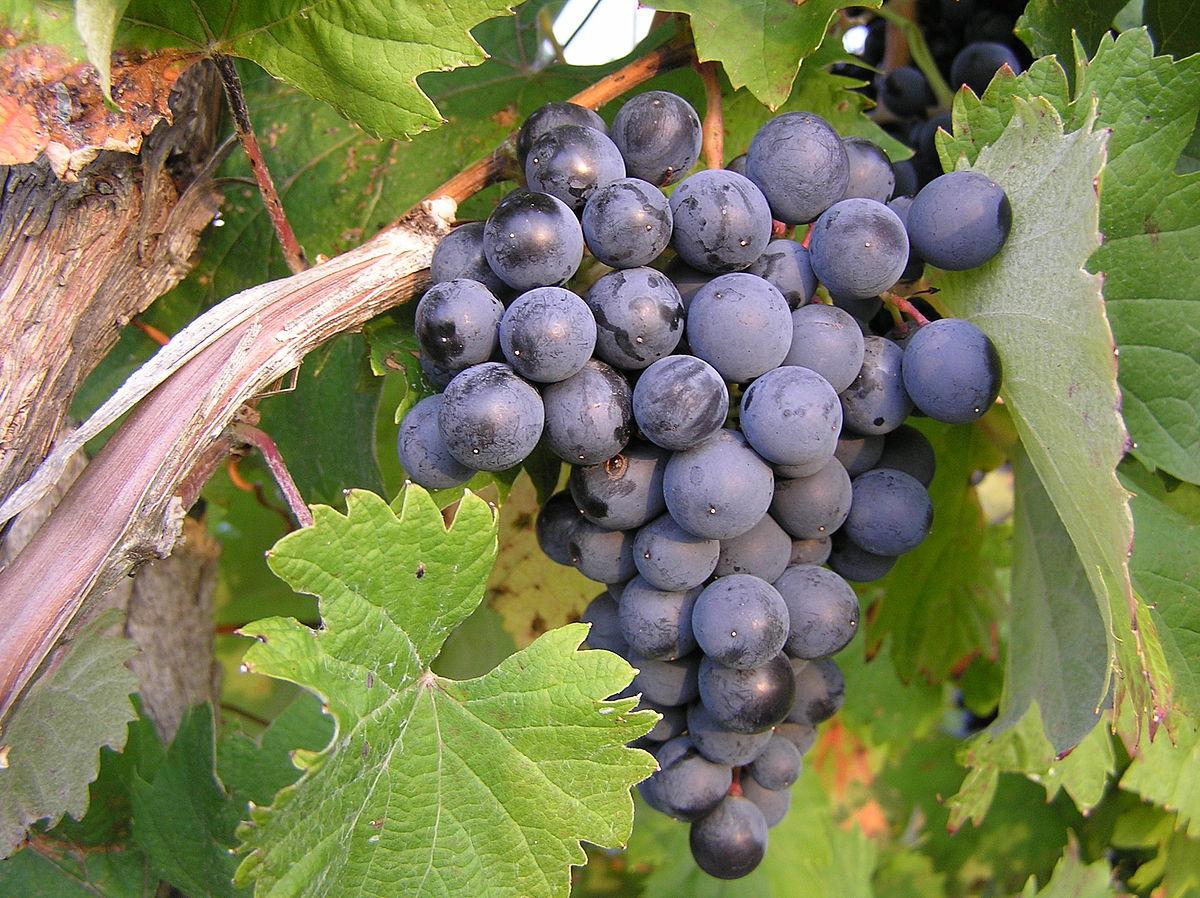 12. 12 sự thật cực kỳ ít người biết về rượu vang1