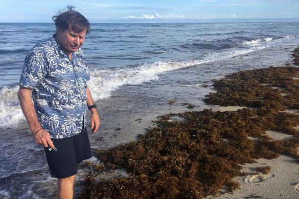 Tiến sĩ Steve Leatherman đứng giữa những đám tảo mơ dạt vào bờ biển Miami ở Florida - Ảnh: AFP
