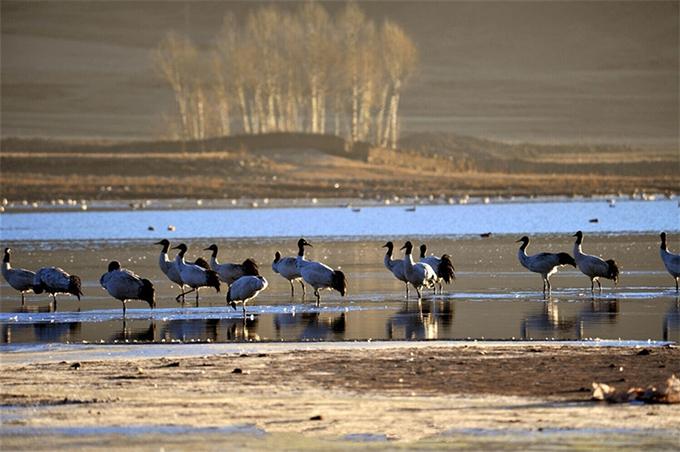 Không chỉ tạo cho du khách cơ hội chiêm ngưỡng nhiều loại chim hoang dã, khu sinh thái sau khi xây dựng hứa hẹn sẽ thu hút ngày càng nhiều loại chim quý hiếm tới sinh sống.