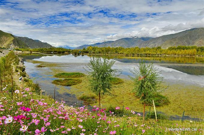 Có nhiều cách để đến với thành phố Lhasa, thủ phủ khu tự trị Tây Tạng như bay thẳng từ các thành phố lớn ở Trung Quốc như Bắc Kinh, Thượng Hải, Quảng Châu, Thành Đô, Trùng Khánh... hoặc đi tàu cao tốc từ những nơi này. Khi đến Lhasa, bạn có thể bắt shuttle bus từ đây về huyện Dagze, sau đó tiếp tục bắt minibus để đến khu sinh thái hồ Kim Sắc.