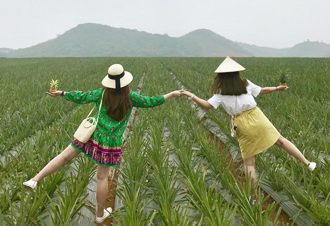 14. 'Sống ảo' ở nông trại dứa Ninh Bình