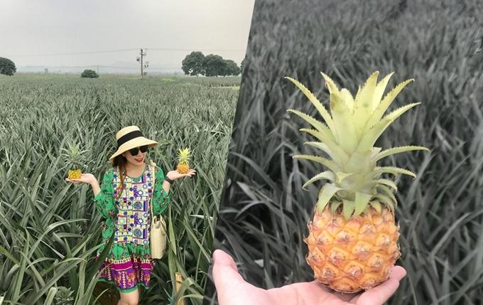 14. 'Sống ảo' ở nông trại dứa Ninh Bình2