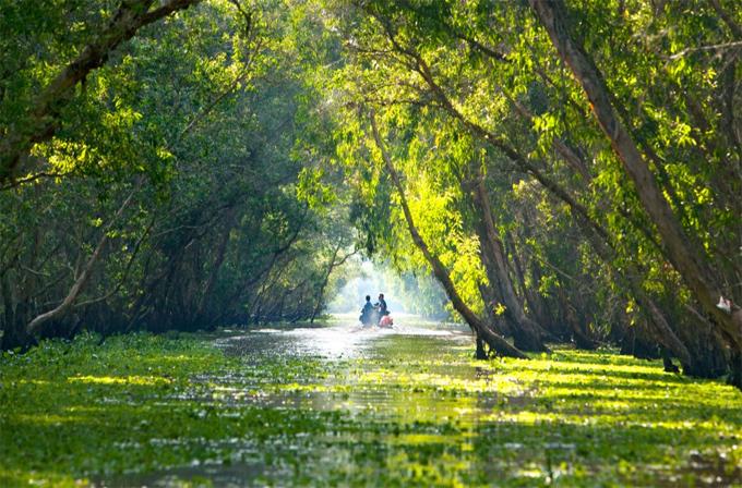 Rừng tràm Trà Sư (An Giang) cuốn hút nhờ sắc xanh của cây tràm và bèo...