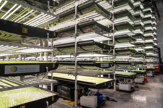 """Nông trại sinh thái được đảm bảo chất lượng từ khâu chọn giống, nguồn nước tưới. Thay vì nằm ở ngoài trời với nguy cơ dính bụi bẩn, sâu bệnh, những luống rau xanh ở AeroFarms nằm hoàn toàn ở trong nhà, với hình thức """"nông trại thẳng đứng""""."""