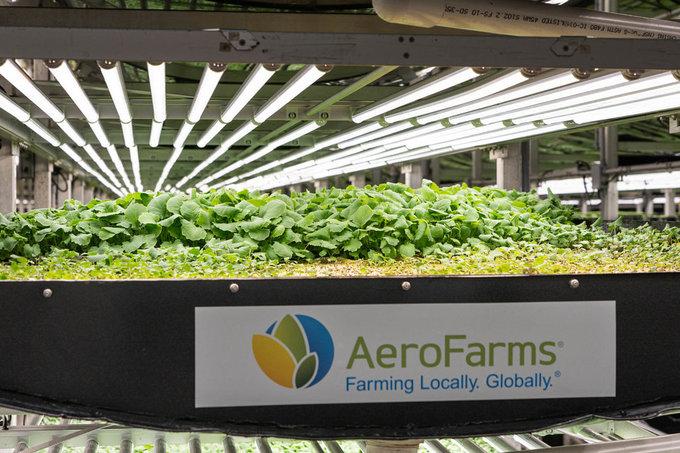 Rau xanh được trồng trong các luống, xếp từng tầng. Ánh sáng được mô phỏng giống với ánh sáng tự nhiên và nhiệt độ được điều chỉnh thích hợp với sự phát triển của rau.