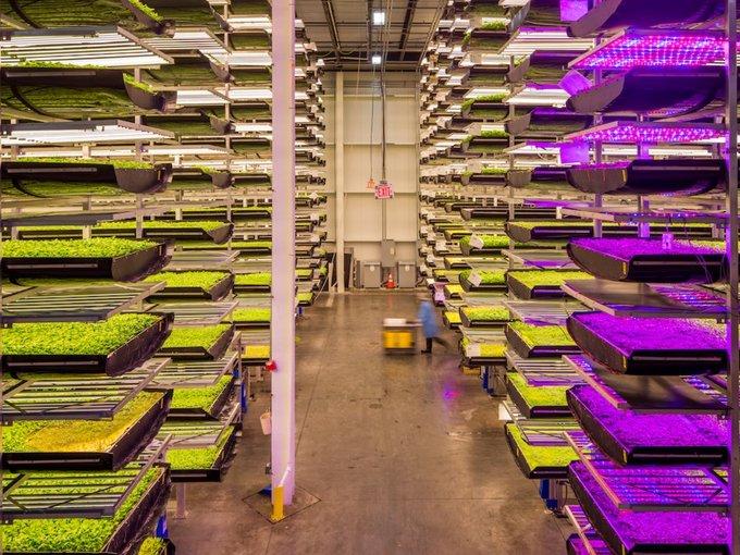 Trang trại trồng nhiều loại rau xanh, trong đó chủ yếu là rau mầm và cải xoong. Trong lần thử nghiệm, chúng sẽ được sử dụng trong các món ăn do Singapore Airlines chuẩn bị cho chuyến bay từ Newark đến Singapore - chuyến bay dài nhất thế giới.
