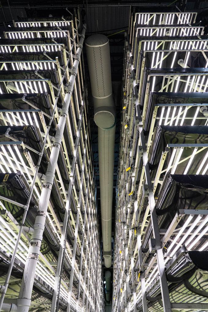 Nông trại rộng khoảng 4.000 m2 nhưng có sản lượng gấp khoảng 390 lần so với những trang trại có cùng diện tích. Ngoài việc sử dụng các khay chồng lên nhau giúp tiết kiệm diện tích, lý do chính của sản lượng đáng kinh ngạc này là do công nghệ aeroponics. Theo đó, người ta sử dụng hệ thống tưới nước sương mù giúp cây có thể sống trong môi trường không có đất, không có thuốc trừ sâu...