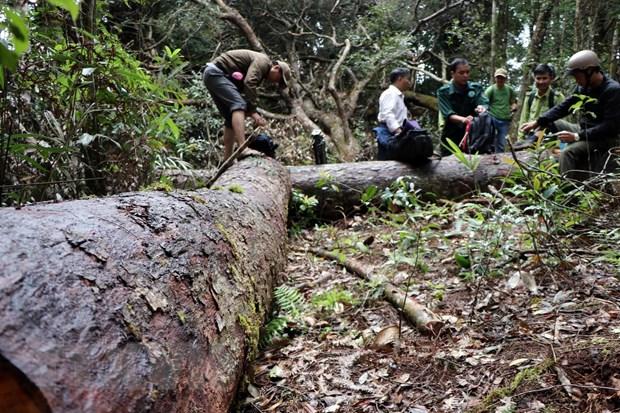 1. 32 gốc cây có đường kính từ 50cm ở rừng Kon Plông bị chặt phá6