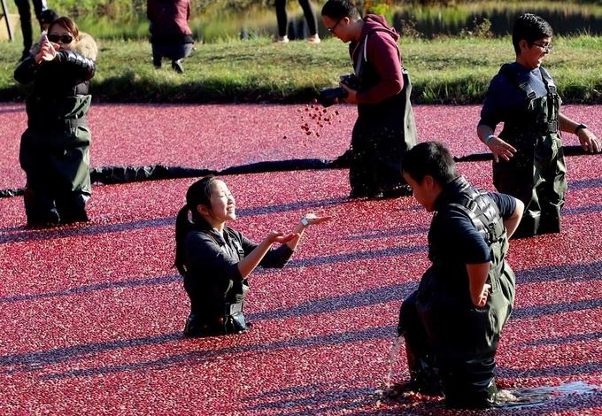 12. Việt quất chín đỏ mặt hồ mùa thu3