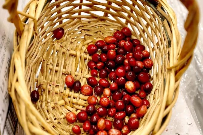 12. Việt quất chín đỏ mặt hồ mùa thu4