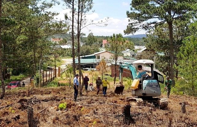 """Trồng lại rừng thông ba lá trên đất rừng bị lấn chiếm trái phép đã được giải tỏa """"nóng""""."""