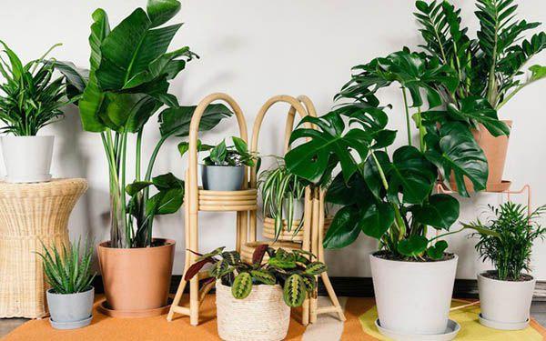 Không chỉ trang trí không gian, cây cảnh còn có khả năng lọc sạch không khí trong nhà.